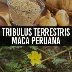 Maca Peruana
